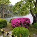 写真: 雨の兼六園にて