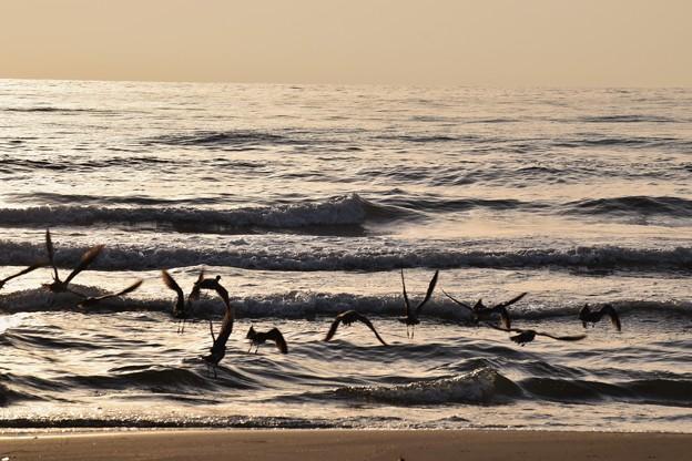 写真: 波打ち際