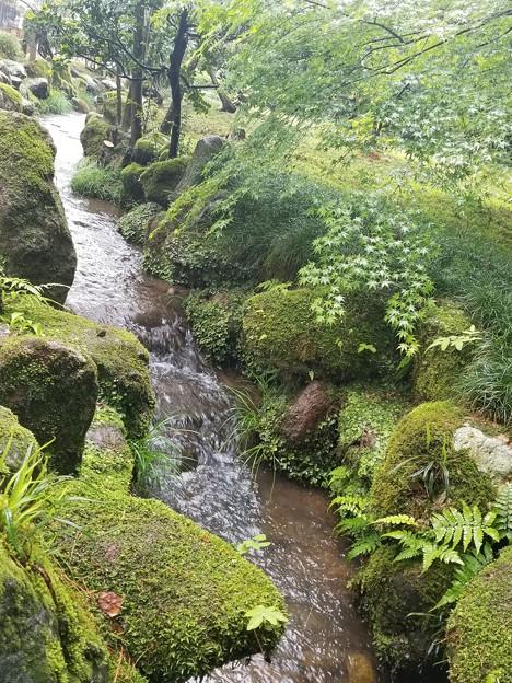 Photos: 苔と新緑の一景 兼六園にて