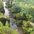 苔と新緑の一景 兼六園にて