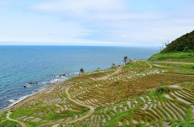 写真: 美しき日本の風景 白米千枚棚田