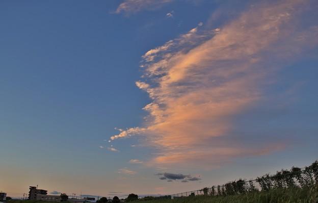 写真: 夕陽を浴びる雲鳥