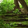 写真: 苔の棲みか