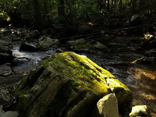 写真: 光り苔