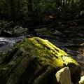 Photos: 光り苔