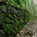 写真: 石垣