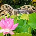 石の橋と蓮