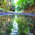 写真: 水たまりの世界