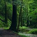 深緑の景色