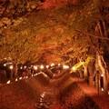 Photos: 河口湖紅葉回廊