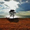 写真: 海を見つめて
