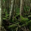 白駒池の森