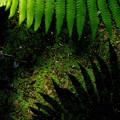 写真: シダの葉と影