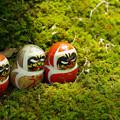 写真: 達磨と苔