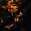 桜の落ち葉