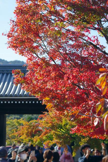 天龍寺門前の紅葉