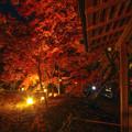 紅葉夜景1