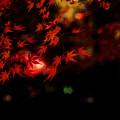 紅葉夜景3