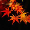 紅葉夜景4