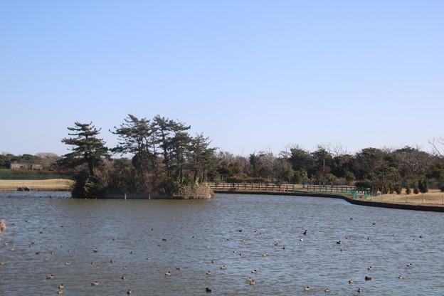 蓮沼海浜公園 水の広場