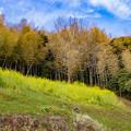 Photos: 里山の春風景