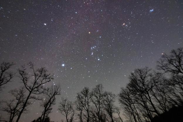 まさに冬の星空!