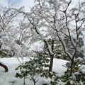 雪の金閣寺 (11)