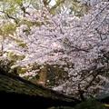 苔むす屋根
