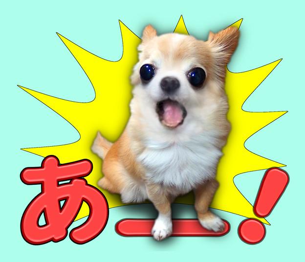 Photos: あー!