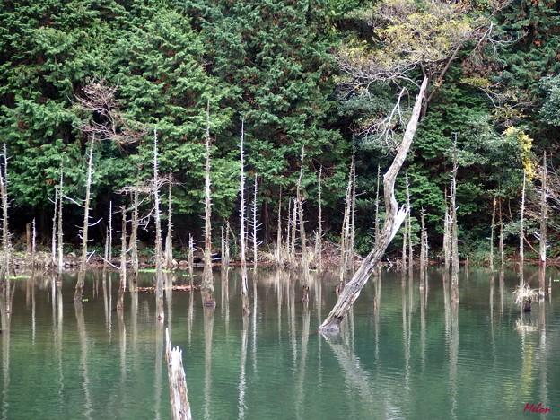 一ノ俣桜公園1