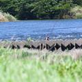 写真: 夏の相模川