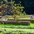写真: 里山の秋