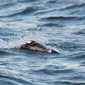 写真: 小魚飛び出し