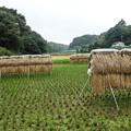 Photos: ハザカケ