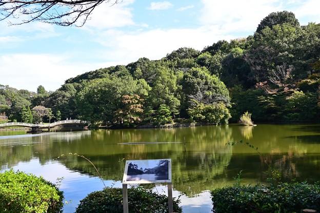 薬師池公園 2