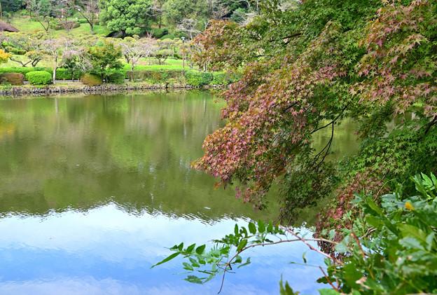 Photos: 薬師池公園  色づき始め