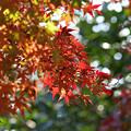 近隣公園の紅葉