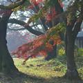 近隣公園の紅葉 (2)