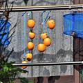 Photos: 家用干し柿作り