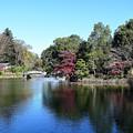 晩秋の薬師池