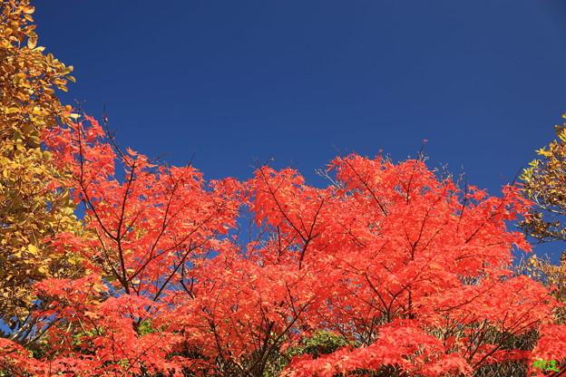 Photos: 〇牧の戸峠5