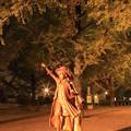 県庁銀杏3