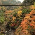 Photos: 〇五家荘樅ノ木橋5