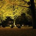 Photos: 県庁の銀杏2