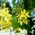 写真: これは街なかの花です