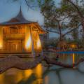 Photos: 夜の庭
