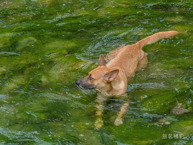 Photos: かっこいい犬