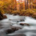 奧入瀬の秋