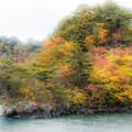 十和田湖見返の松