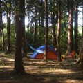 森のキャンプ